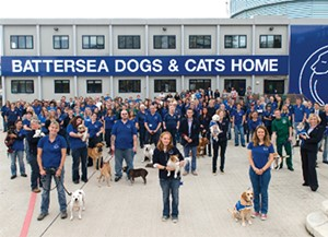 battersea dogs cats home